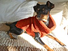 Super Easy Crochet Dog Sweater