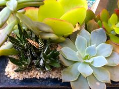 Available At Bucks Country Gardens, Doylestown PA. #succulents #gardening |  Succulents And Terrariums | Pinterest | Virtual Tour, Gardens And Terrariums