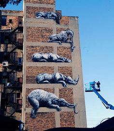 Street Art animals