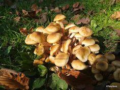Stuffed Mushrooms, Urban, Vegetables, Nature, Food, Preserves, Salads, Stuff Mushrooms, Naturaleza