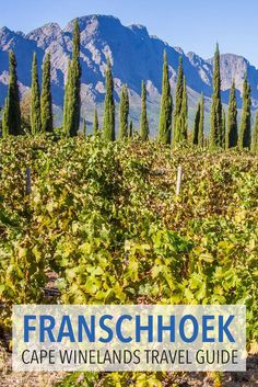 Franschhoek is a scenic village in South Africa's Cape Winelands. It's the perfect place for a decadent few days wine tasting, eating in gourmet restaurants and enjoying the stunning vineyard and mountain views. Click through to learn everything you need to know for a great stay.