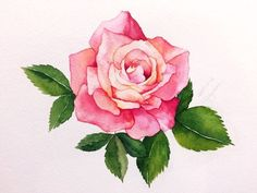 Sign the rose guest book Watercolor Sketchbook, Watercolor Cards, Watercolor Flowers, Watercolor Paintings For Beginners, Winter Painting, Plant Drawing, Flower Wallpaper, Gouache, Flower Art