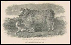 Lamb - Softly - YouTube