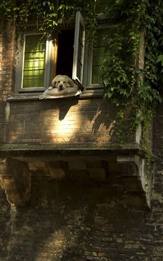 While sailing on a little boat throgh the canals of Bruges, Belgium, saw this dog by the window, resting on a pillow and watching the landscape. Nature Aesthetic, Pretty Pictures, Aesthetic Pictures, Countryside, Beautiful Places, Scenery, Cute Animals, Cottage, In This Moment