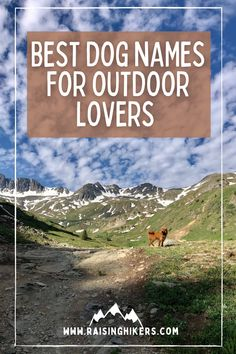 Naming a new pup? Plan to raise an outdoorsy dog who will hit the hiking trails with you? Check out these mountain lover dog names for the outdoorsy dog! We named our Labradoodle, Jasper after Jasper National Park. See the other names that were on our list! #hikingdogs #labradoodle #outdoordognames Best Dog Names, Cool Names, Hiking Dogs, Hiking Trails, Strong Dog Names, North Cascades National Park, Family Adventure, Labradoodle, Family Dogs