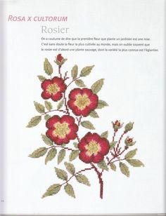 (3) Gallery.ru / Fotoğraf # 60 - Herbier - Mosca