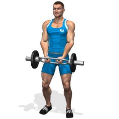 STANDING HAMMER BAR CURL INVOLVED MUSCLES DURING THE TRAINING BICEPS