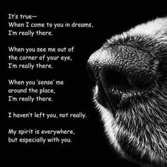 """A little #tribute to all of the dogs we've known, loved and lost. Slaid Cleaves wrote """"Without Her"""" - a #love #song to his dog after she died. """"It's just a little dimmer without her..."""""""