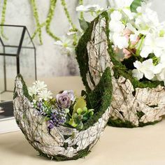 s exciting new line of Natural Preserved Moss Decoration Supplies and Craft Supplies. Offering Rock Bottom Prices on Moss Plants, Moss Grass, Moss Balls, Moss Fillers and more! Moss Grass, Mosses Basket, Green Bathroom Decor, Moss Plant, Wooden Planter Boxes, Wooden Textures, Large Planters, Green Accents, Small Plants