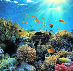 """""""Return to Paradise"""" : Tania Wursig expose à la Galerie Winkler - Moving Tahiti Tahiti, Removable Wall Murals, Natural Sunscreen, Red Sea, Great Barrier Reef, Tropical Fish, Tropical Beaches, Underwater Photography, The Real World"""