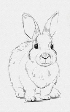 Как нарисовать зайца карандашом - Здравствуйте, дорогие читатели!  На сайт приходит очень много просьб сделать урок, как нарисовать зайца. Это милое животное встречается и в сказках, и в народных пословицах. Его безумно любят все дети, именно за милую и забавную �
