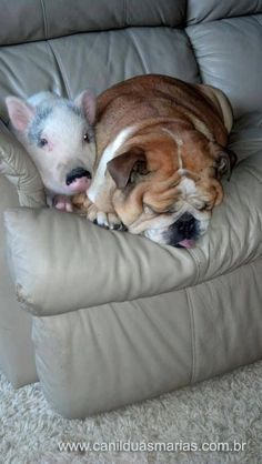 My two favorite animals, dogs and pigs! I will have a pet pig one of these days.