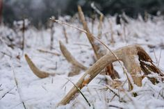 here are 7 mistakes you will make this year during shed hunting and tips to correct them