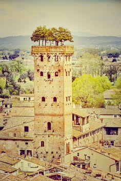 The Guinigi #Tower, Lucca, #Italy