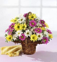 Margaritas de diferentes colores, esta cesta es un regalo muy colorido, muy primaveral, lo puedes regalar para cualquier ocasion, cumpleaños, nacimiento, madre etc. Nuestras materia prima es de la mejor, sera enviada al domicilio en un bonito envoltorio.