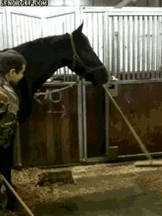 sweeping horse