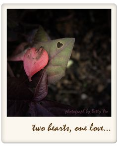 caterpillar in love....
