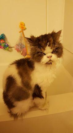 """awwww! Cute!  <a href=""""http://musapg.catspray.hop.clickbank.net/""""><img src=""""http://www.catsprayingnomore.com/images/banners/standard/ad3.jpg"""" border=""""0"""" alt=""""Cat Spraying No More"""" /></a>"""