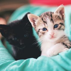 These will be my future cats <3