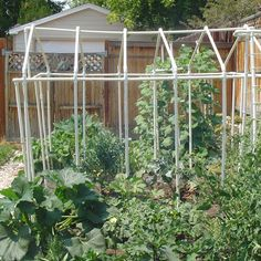 A small backyard garden, even one as compact as 8x6, can be a useful way to conserve food costs and produce sustainable crops.