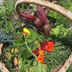 Looking forward to amazing #vegan Sunday lunch with this organic veg from the raised beds. Beetroot lettuce perennial wall rocket new potatoes fennel courgettes mint cavelo Nero kale and some nasturtium and marigolds for good measure. What a day to celebrate and enjoy the host of insects and butterflies which have been enjoying the bounty too.