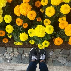 Hunger Games in Floral Baguio Baguio City, Hunger Games, Philippines, Beautiful Places, Wanderlust, Events, Yellow, Floral, Color