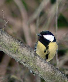 Posts about Potulky prírodou written by karinsuvegova Bratislava, Tao, Posts, Bird, Animals, Messages, Animales, Animaux, Birds