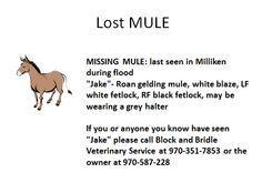 Lost Mule Milliken Colorado