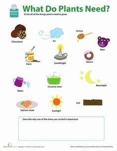 planting a seed cut paste sequencing activity science social studies pinterest activities. Black Bedroom Furniture Sets. Home Design Ideas