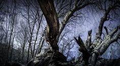 The Chained Oak Plants, Photography, Art, Art Background, Photograph, Fotografie, Kunst, Photoshoot, Plant