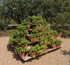 Pěstování jahod v pyramidě a další způsoby jak šetřit… | iReceptář.cz Plants, Log Projects, Places, Lawn And Garden, Plant, Planting, Planets