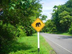Prohibido elefantes Wind Turbine, Thailand Travel, Elephants