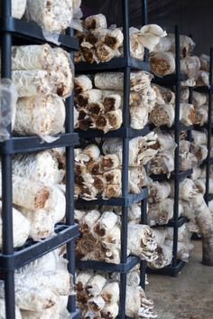If you have ever wanted to grow mushrooms to save money buying them, you might also consider growing them as a small start-up business. Once you learn the basics of mushroom...