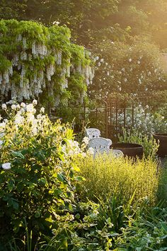 wisteria - I love the light in this photograph, it looks as though it is late afternoon, time for a cup of tea Moon Garden, Lush Garden, Summer Garden, Garden Planters, Dream Garden, Beautiful Landscapes, Beautiful Gardens, Beautiful Flowers, My Secret Garden