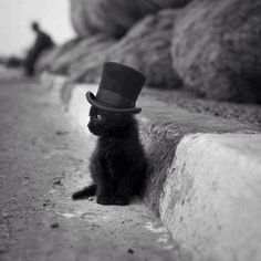 black kitty with top hat... :) How could anyone think that black cats were unlucky after seeing this???