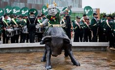 Rocky riding the bull statue outside the #USF Marshall Student Center.