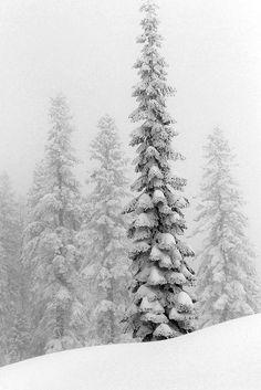 Winter forest - snow as | Xmas decoration . Weihnachtsdekoration . décoration noël | Photo by Clipzine |