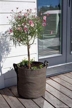 Kesäkukat – takapiha    Helposti siirrettävät kukat, myös yrtit näissä toimii