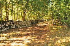 Un mur de pierres sèches dans le causse du Quercy, du côté du Planagrèze à Caniac du Causse.