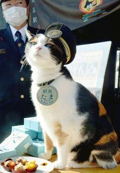 Cat stationmaster Tama, superstar in western Japan, dies Wakayama, Old Cats, Cats And Kittens, Crazy Cat Lady, Crazy Cats, I Love Cats, Cute Cats, Purebred Cats, Japanese Cat