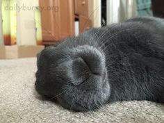 Flopped bunny is fast asleep - September 22, 2017