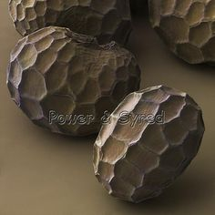 Common poppy seeds (Papaver rhoeas) SEM