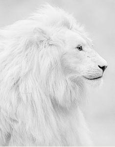 ~White Splendour~