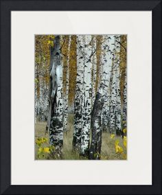 """""""Birch Tree Forest"""" by I.M. Spadecaller, Tampa Bay // Digitally hand painted composite of images created in Photoshop. // Imagekind.com -- Buy stunning fine art prints, framed prints and canvas prints directly from independent working artists and photographers."""