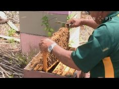 Niue Honey Bees - YouTube