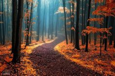 Enchanting Photos of Autumnal Forests by a Wandering Photographer - My Modern Met