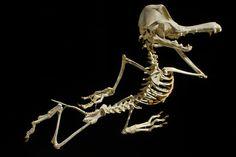 Lee s'amuse à reconstituer les squelettes des héros de cartoons les plus emblématiques