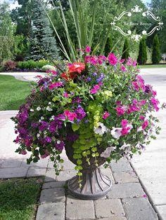 Summer flower Planter