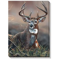 This wrapped canvas features original art by Scot Storm and offers the look and feel of an original wildlife painting at a reasonable price. This breathtaking canvas arrives ready to hang unframed, an