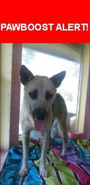 Please spread the word! Daisy was last seen in Corpus Christi, TX 78411.  Description: Missing since 10-16-2016.  Last seen in the South Staples/Williams area.  Daisy is a German Shepherd/Husky mix.  She is skittish, so please do not approach or chase. Just call  Nearest Address: 5725 Curtis Clark Dr, Corpus Christi, TX 78412, United States